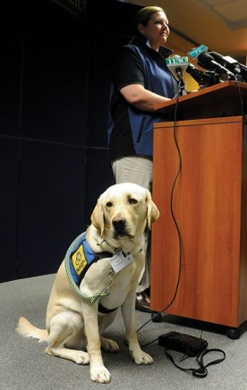"""Victim Services Coordinator and the DPD Trauma K9 """"Caber"""""""
